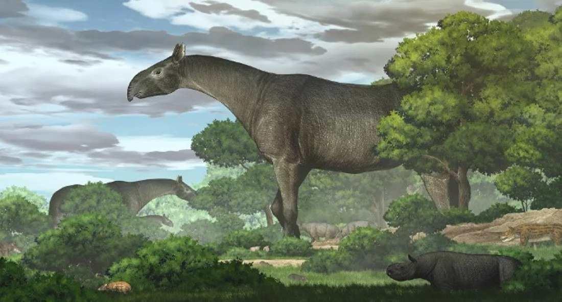 Reuters / Chen Yu/Instituto de Paleontologia de Vertebrados da China